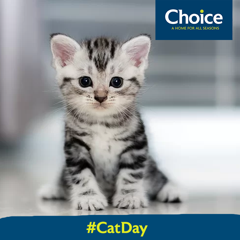 Choice International Cat Day!